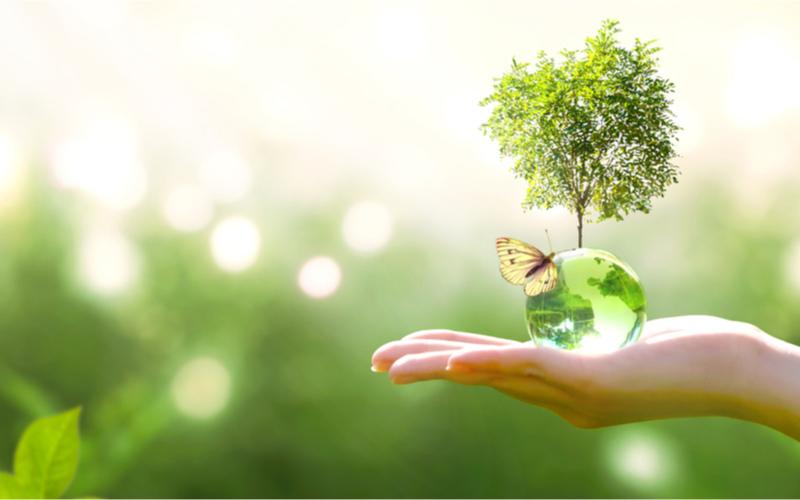 Grünes Klima